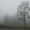 Тверскую область накроет густой непроглядный туман