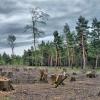 Почти 7 миллионов заплатит торжокский колхоз за вырубку лесов