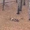 В Тверской области во дворе школы посреди бела дня парочка занималась сексом (видео)