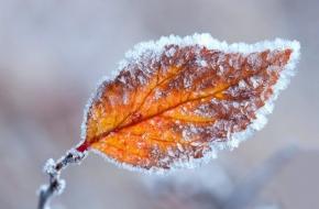 В ближайшие дни в Тверской области ожидается резкое похолодание