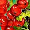 16 ноября в Лихославле откроется выставка картин Елены Меньшиковой «Как прекрасен этот мир»