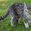 Лихославльские ветеринары проводят акцию по стерилизации кошек и кастрации котов