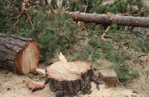 В Лихославльском районе пресекли незаконную вырубку леса