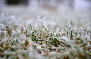 В Тверской области ожидаются заморозки до -2 градусов