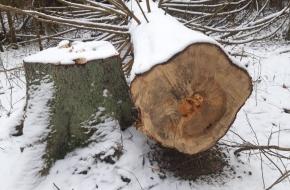 В Лихославльском районе поймали «черного лесоруба» (фото)