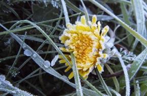 В Тверскую область идут заморозки