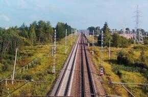 В Лихославльском районе скорый поезд сбил лося