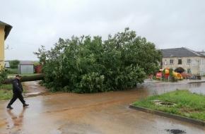 В поселке Калашниково упавшее дерево придавило три автомобиля (фото)