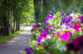 Летом на улицах города Лихославля было высажено более 23 тысяч цветов