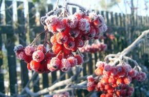 В Тверской области ожидаются заморозки до -1 градуса