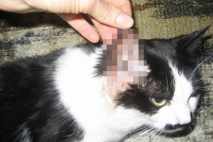 Кот по кличке Том. Фото: tver.kp.ru