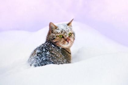 В Тверской области сохранится ветреная и морозная погода