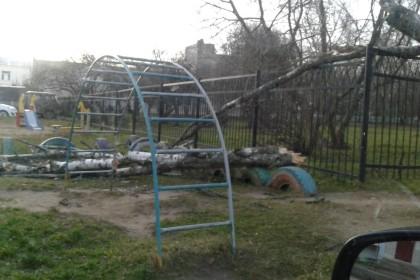 Поваленные деревья в Лихославле. Фото: Евгений Фурсов
