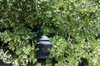 В поселке Калашниково упавшее дерево придавило три автомобиля. Фото: Наталья Большакова