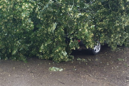 В поселке Калашниково упавшее дерево придавило три автомобиля